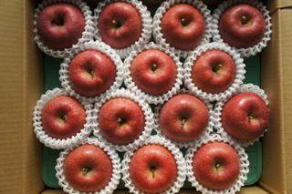 贈答用りんご「サンふじ」5キロ