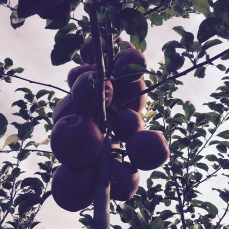 りんごすずなり